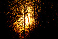 sunset through a thicket