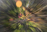 into the forest at warp speed