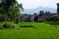 rice paddy, outskirts Guilin
