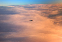 black bird traverses immense sea of cloud