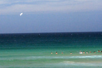 gull over Manly beach 3