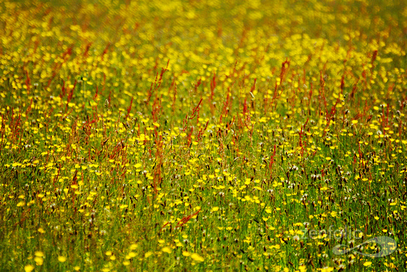 meadow, Brockweir