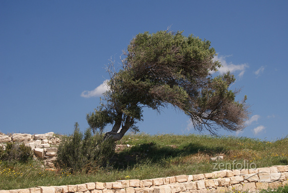 very windblown, Kourion
