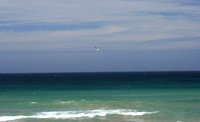gull over Manly beach 2