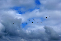 formation of geese from ransdorp tower